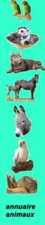 ANNUAIRE ANIMAUX classé par especes, chiens, chats, oiseaux, rongeurs, anes, chevaux, aquariophilie, furets, chinchillas, protection, ect